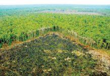 Desforestación de la amazonía