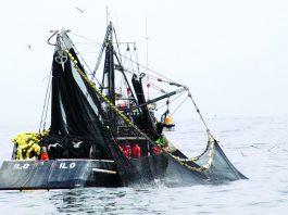 Pesca en Perú