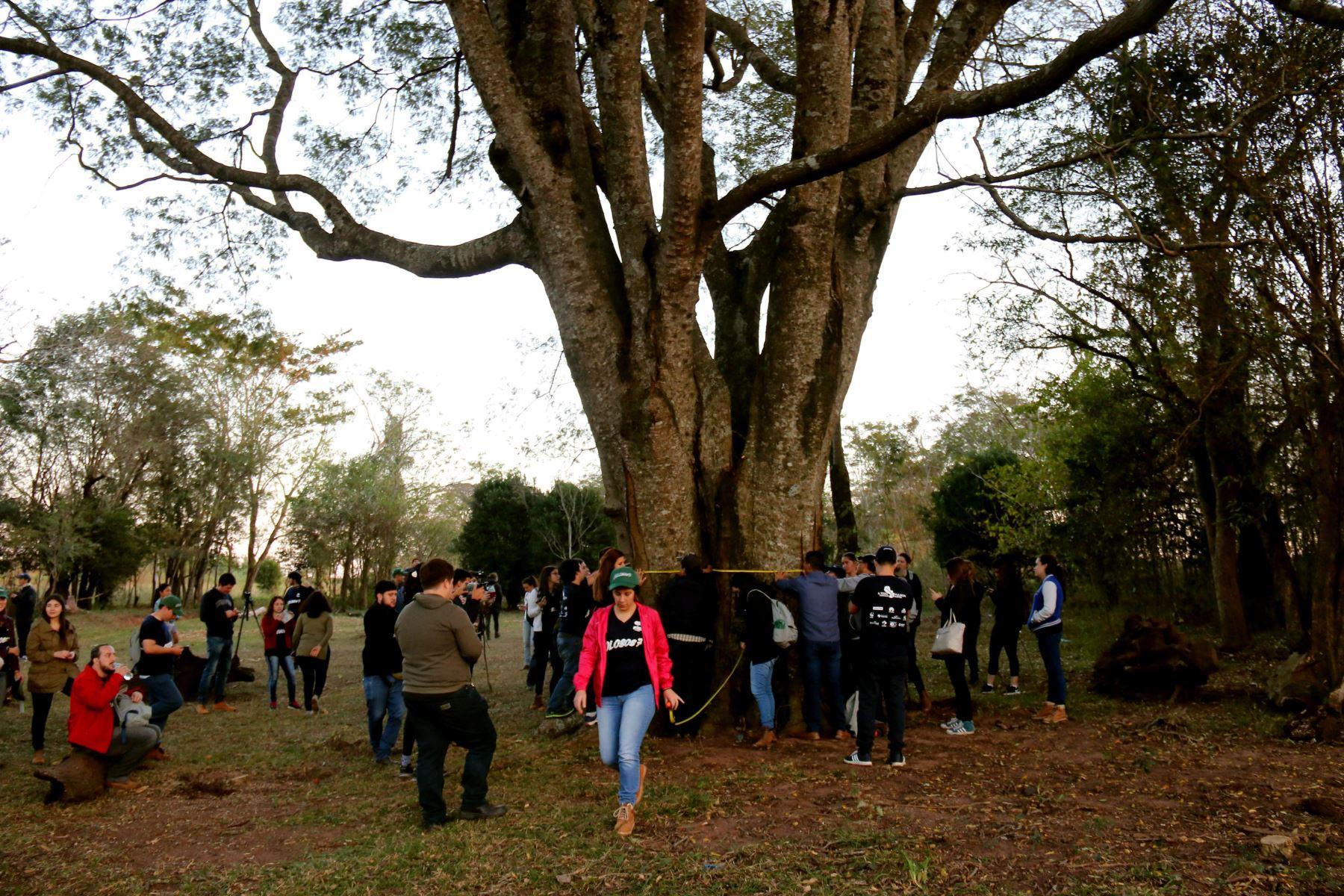 """Paraguayos buscan los árboles """"colosos"""" que perviven en sus bosques"""