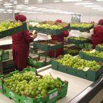 Agroexportaciones tocan máximo histórico del país