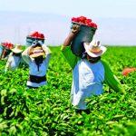 El Ministerio de Agricultura ha gestionado una partida de S/100 millones para facilitarle esos créditos en base a tasas asequibles.