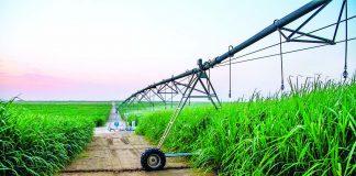 Flamante ingenio azucarero de Olmos gana certificación para mercado mundial