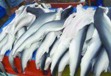 epósito privado en el Callao, un cargamento de carne y aletas de tiburón que se pretendían ingresar al Perú