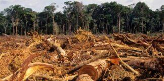 Bosques deforestados de la Amazonía.