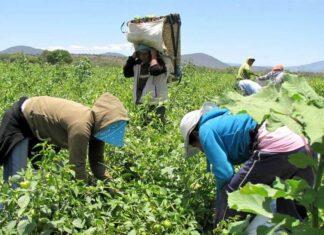 promoción agraria