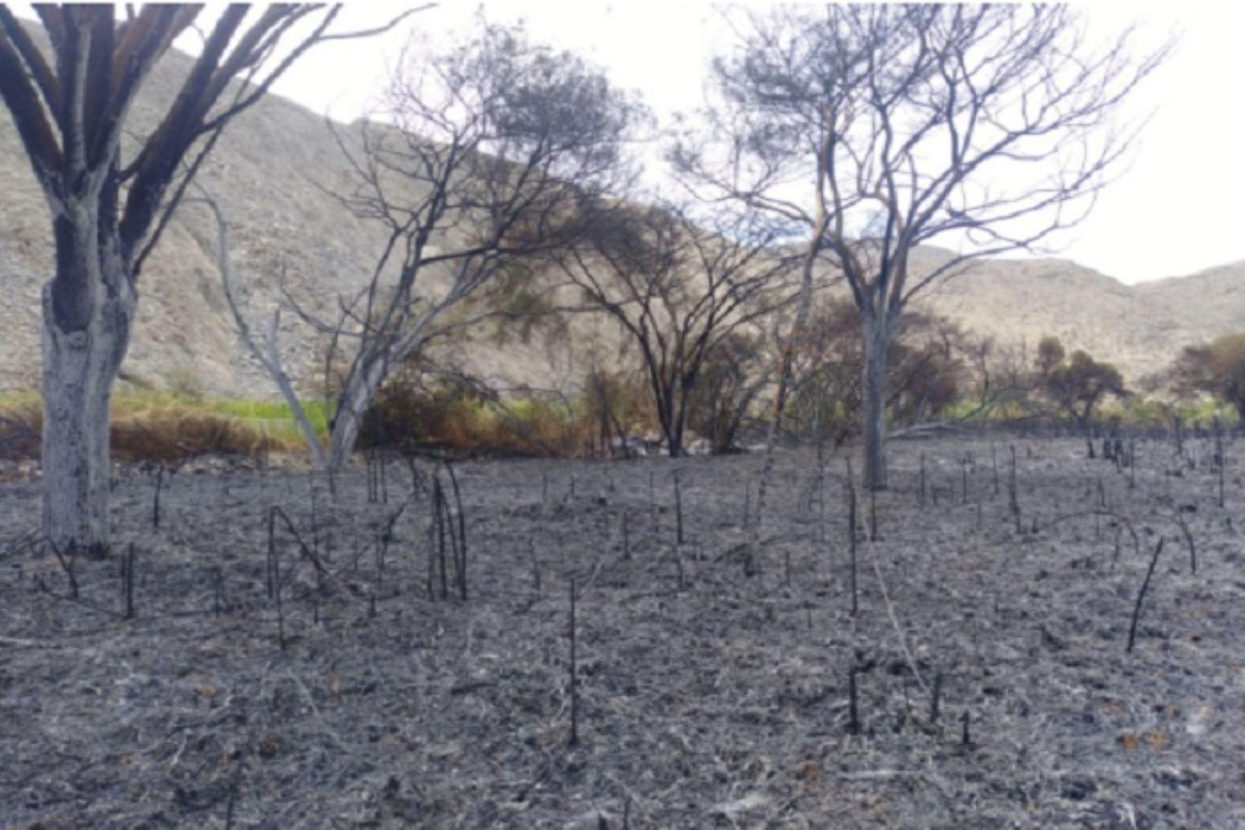 Áncash: Incendio forestal arrasó con 25 hectáreas de cobertura vegetal