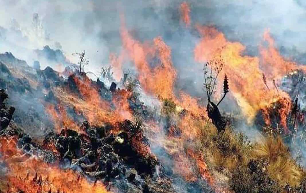 Incendio incontrolable genera grandes pérdidas ambientales en Cusco