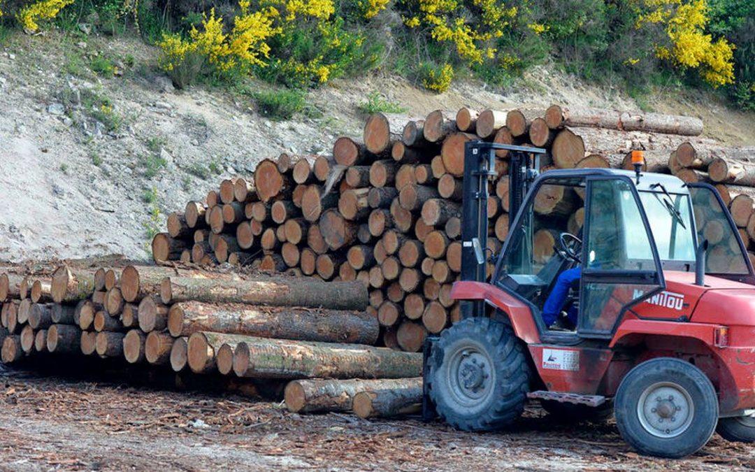 Condenan a una empresa de EEUU por importar madera ilegal