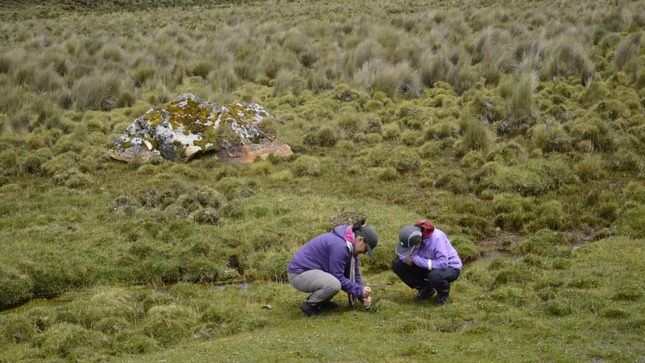 Primer Inventario de Bofedales permitirá gestión sostenible en beneficio de pueblos