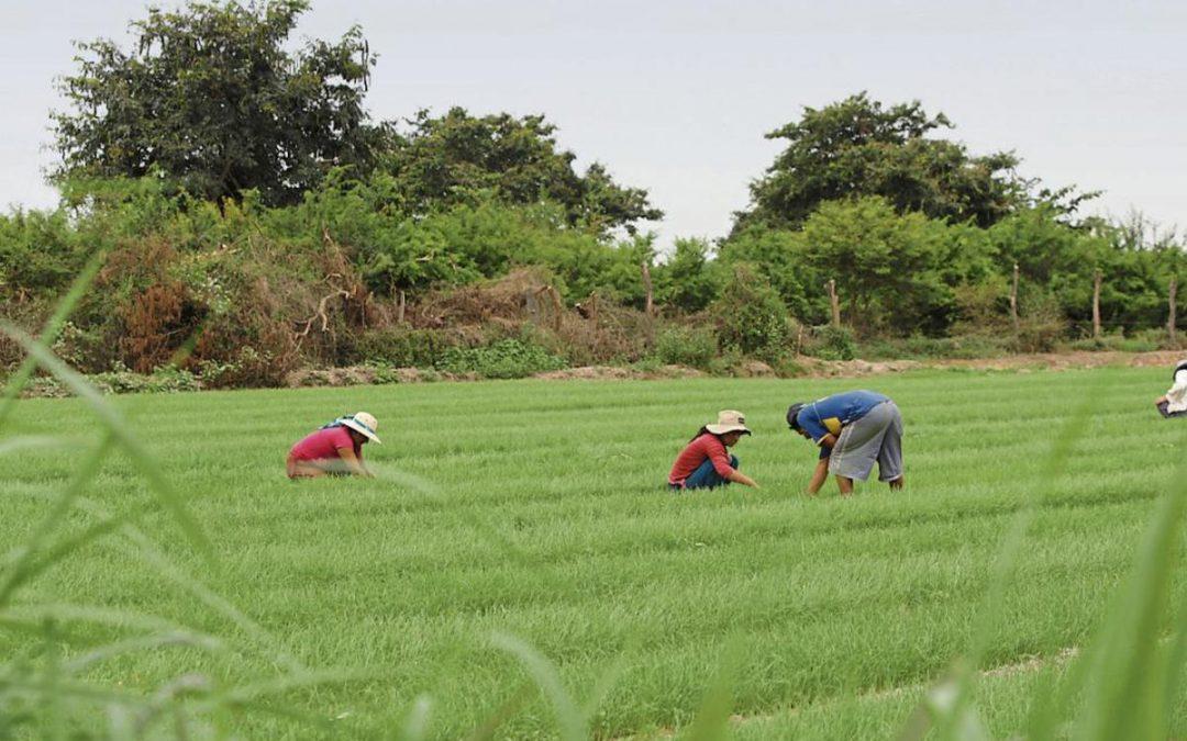MIDAGRO lanza 2da. reforma agraria para industrializar y tecnificar el agro
