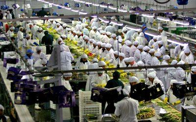 Adex: Empleo en exportaciones de enero y agosto 2021, supera nivel prepandemia
