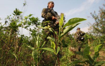 Perú es el segundo país en producción de la coca