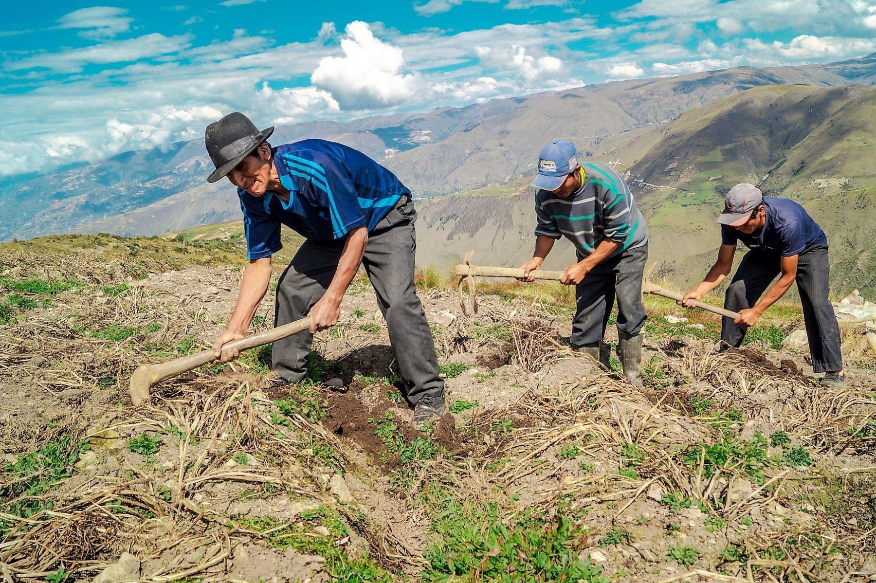 Bono Yanapay se ampliará para incluir a los agricultores entre los beneficiarios